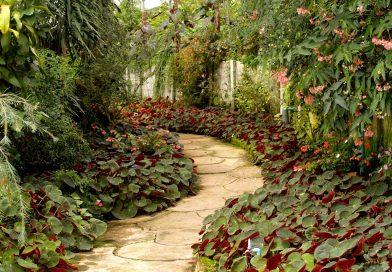 Je tuin bestrating onderhouden doe je zo